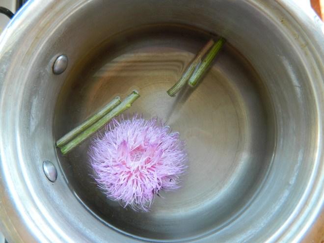 Tallos y flor de silimarina
